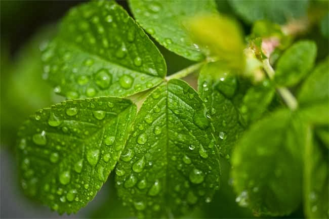 Grüne Blätter einer Pflanze