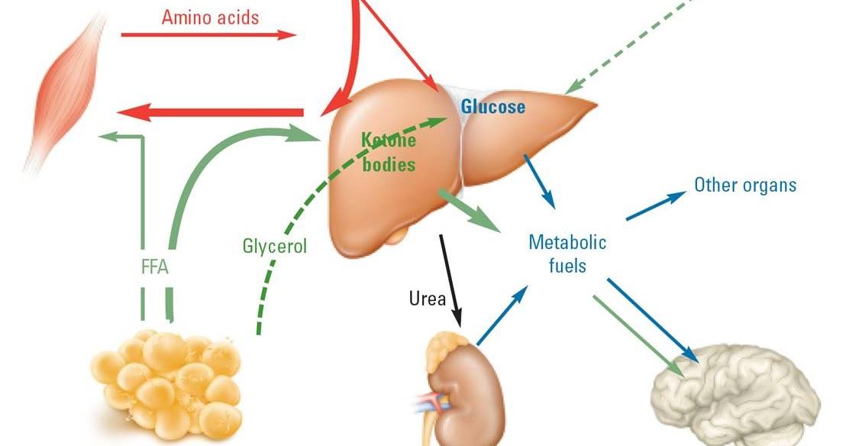 Tag: Cystitis bakteri