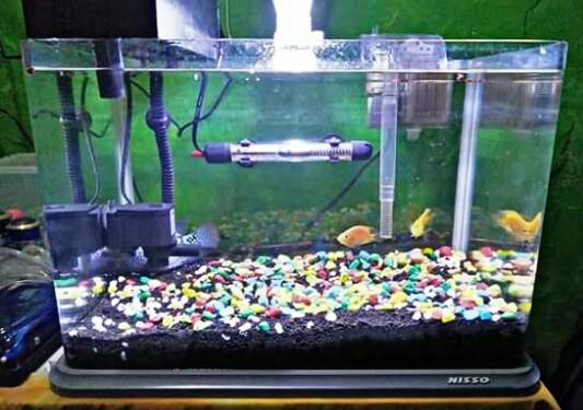 Perlengkapan Aquarium Ikan Hias Dan Fungsinya Lengkap Hobinatang