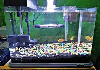 Perlengkapan Akuarium Untuk Ikan Hias