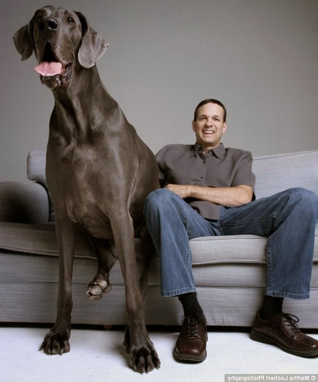 Largest Dog Breeds In The World 2011