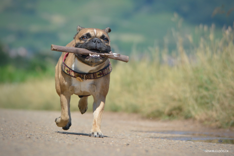 Hundespielzeug DOOG Woody, the Stick Stock für Hunde