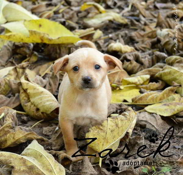cachorro talla pequeña mediana