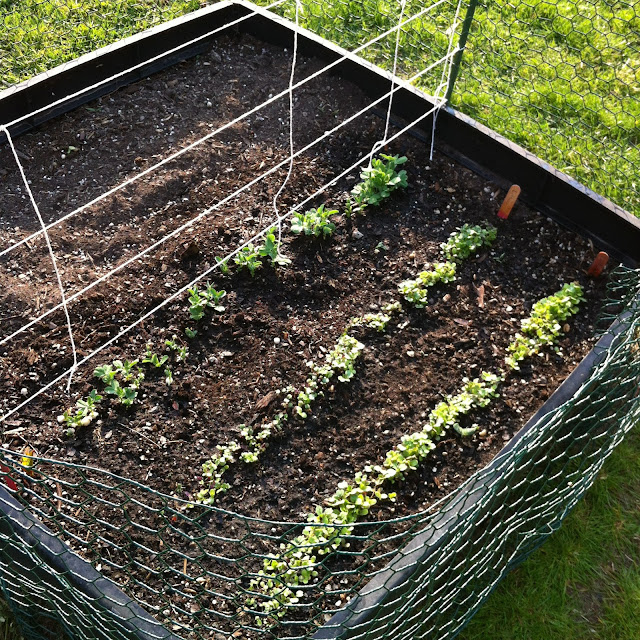 Protect your garden from critters and provide space for your plants to grow