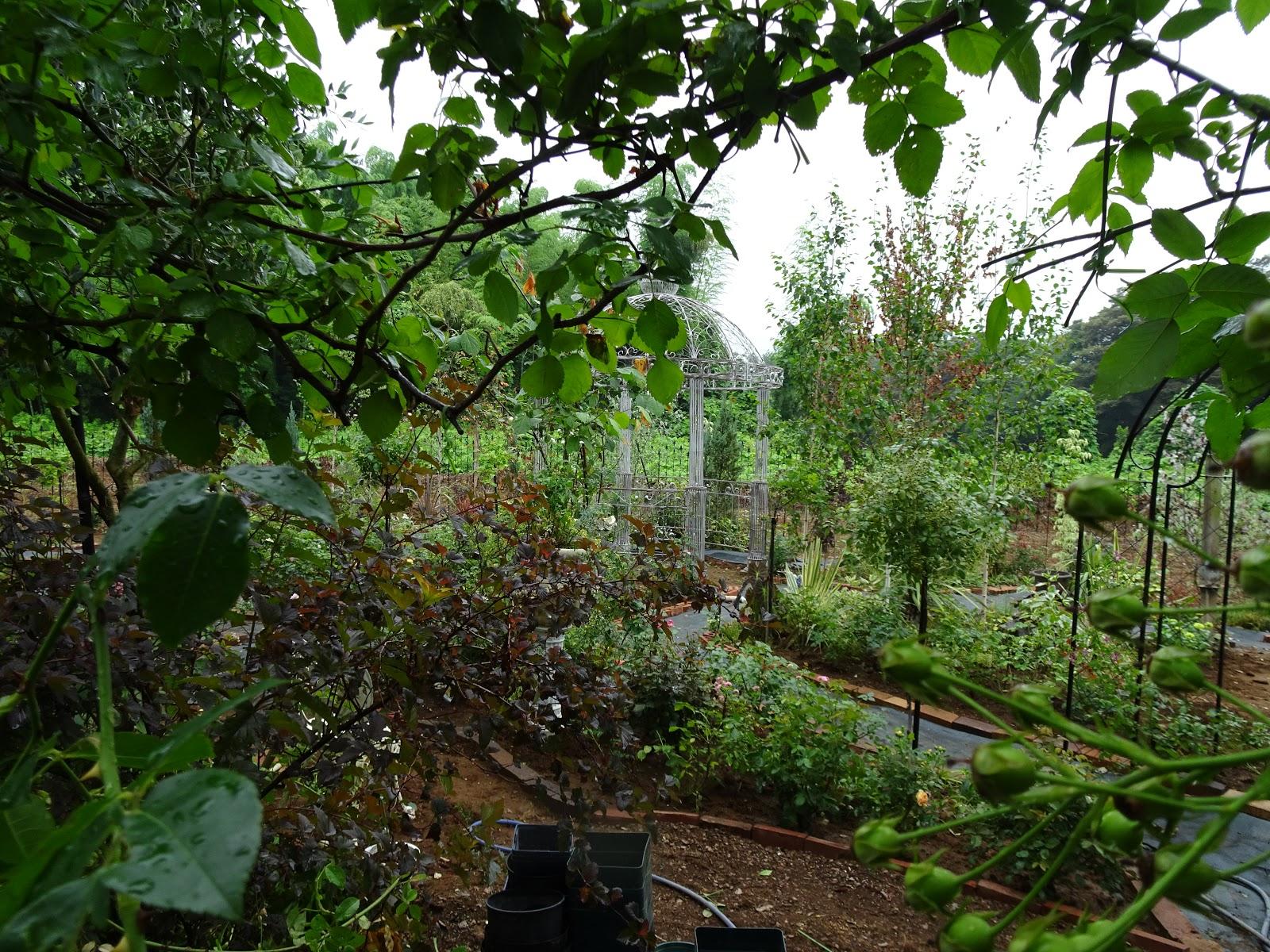 Le jardin secret for Le jardin secret chicha
