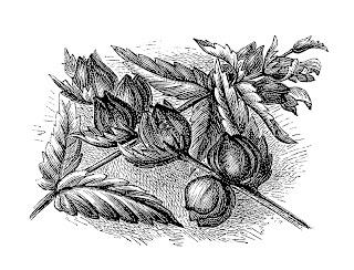 flower artwork drawing wildflower illustration download
