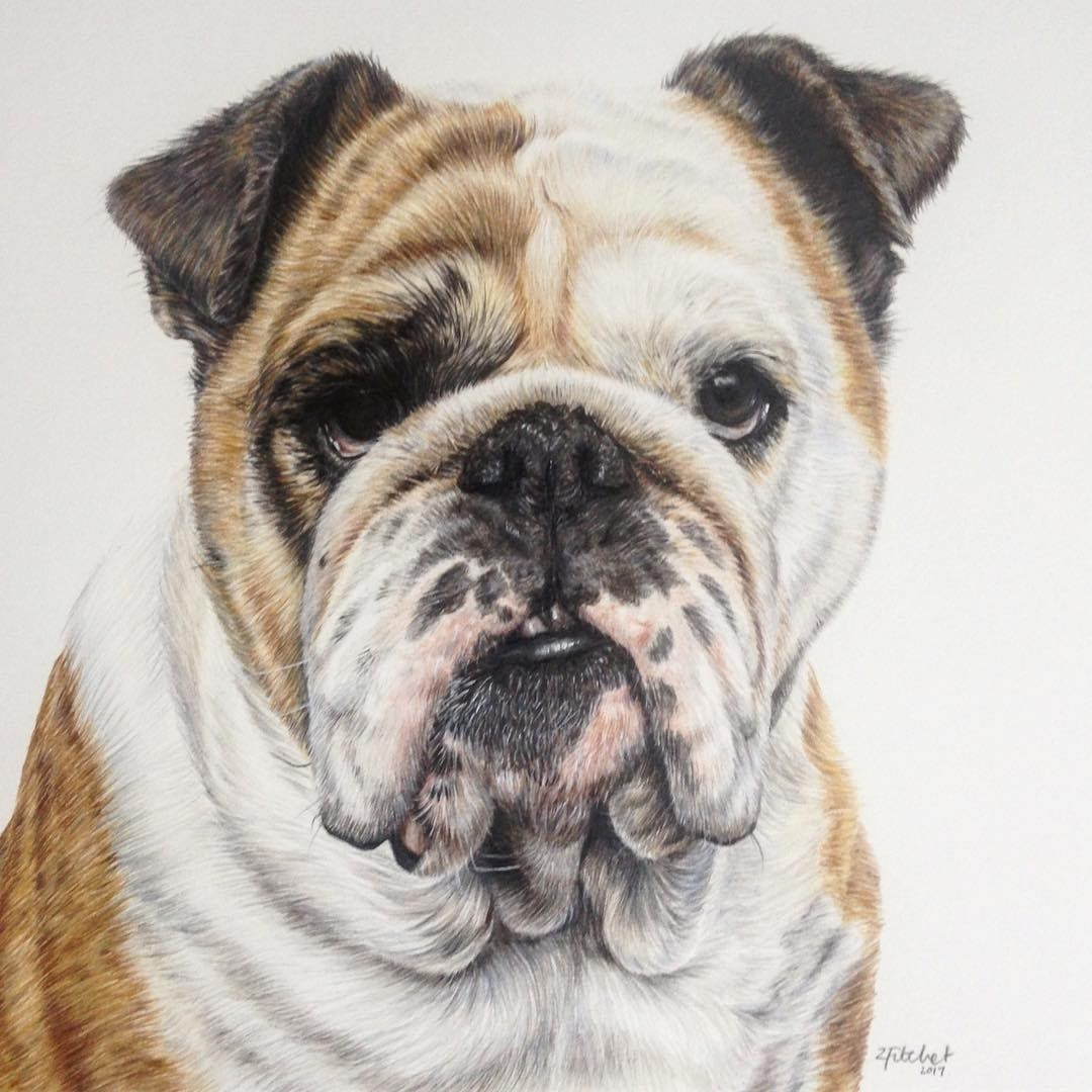 07-British-bulldog-Zoe-Fitchet-Pet-Portraits-Cats-and-Dogs-Drawings-www-designstack-co