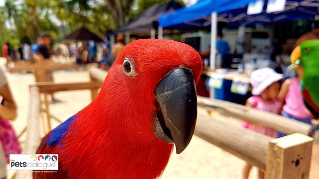 Bird event in Singaopre