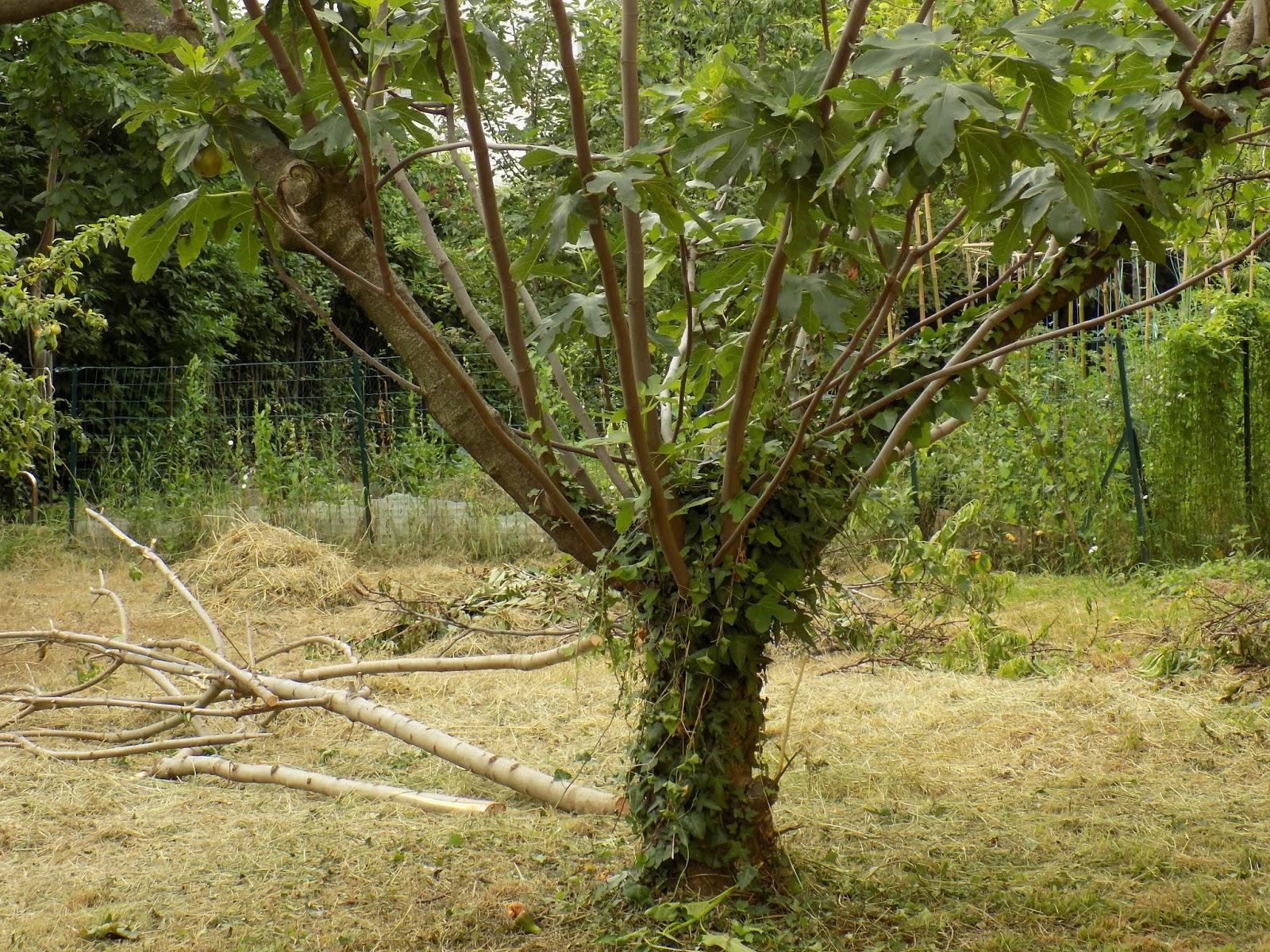 Orti e giardini for Cespugli giardino