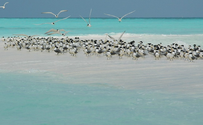 www.xvlor.com Tubbataha Reefs Natural Park is spectacular lagoon atoll and sea wall