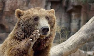 Darıca Hayvanat Bahçesi Hakkında Bilgi