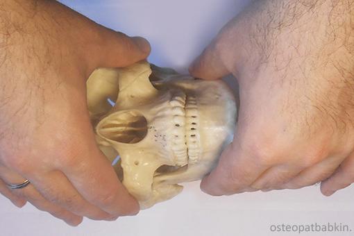 средний и нижний этажи лицевого черепа