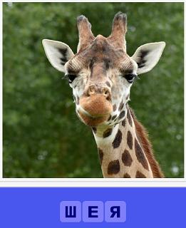 на фоне леса стоит жираф с длинной шеей