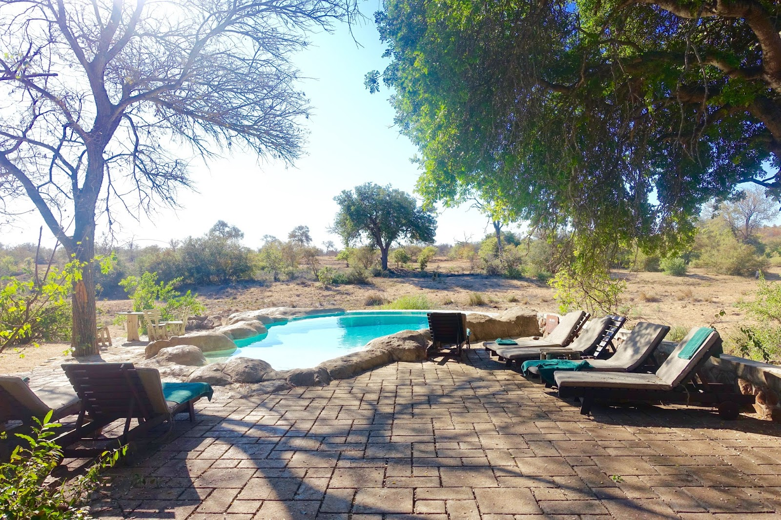 swimming pool at motswari lodge