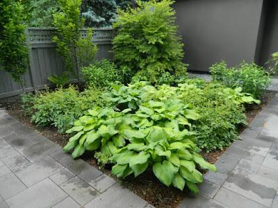 Greektown Toronto new perennial garden by garden muses not another Toronto gardening blog
