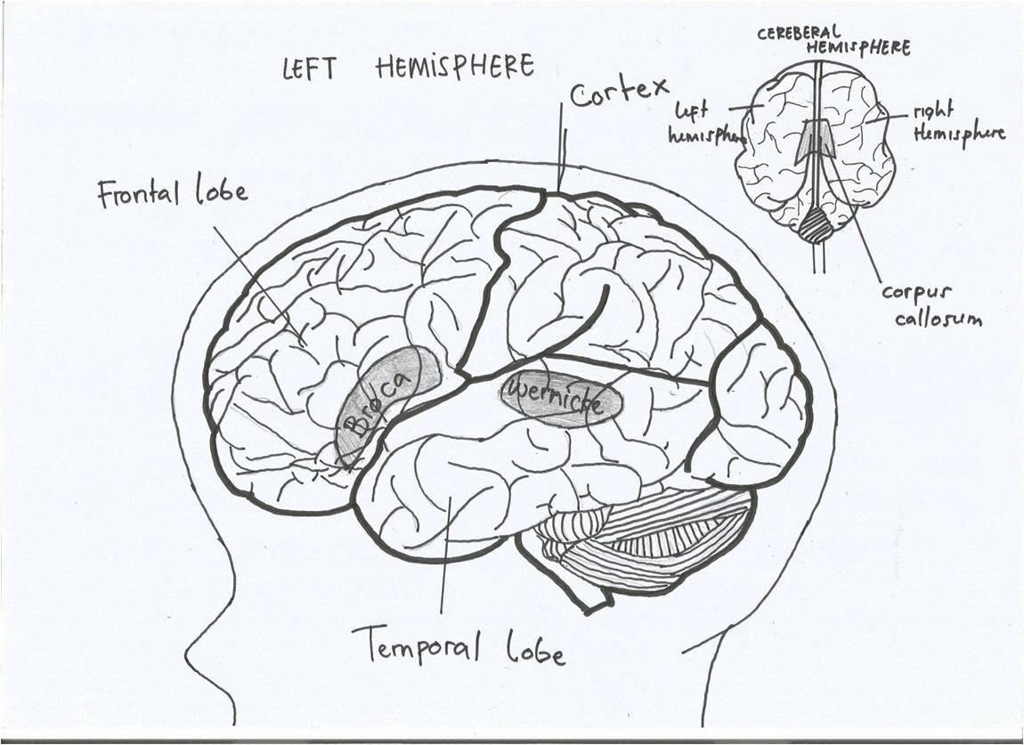 Fiana Isnaeni Maheda Ronie: Linguistics: Neurolinguistics