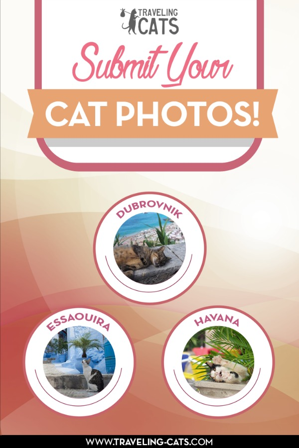 submit your cat photos