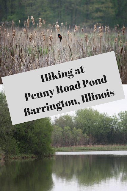 Hiking at Penny Road Pond in Barrington, Illinois