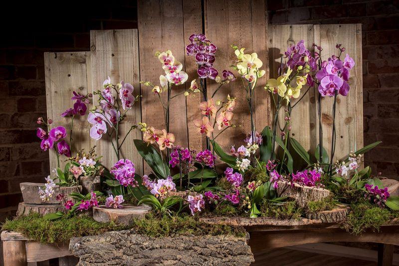 Exhibición de orquídeas sobre musgo y troncos de arbol