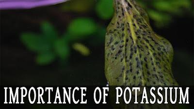 potassium for planted tank