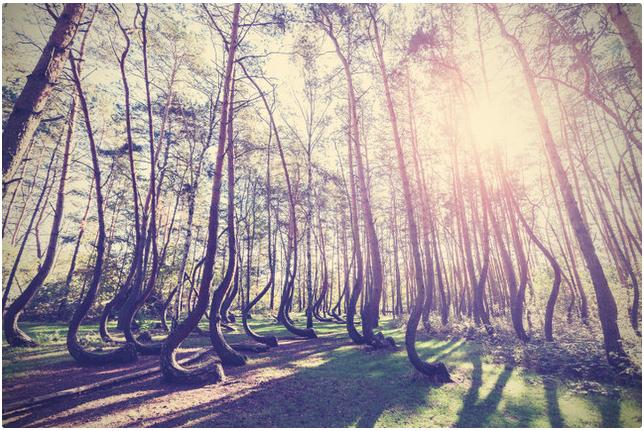 Tanaman Di Slope Point, Pohon-Pohon Tumbuh Miring