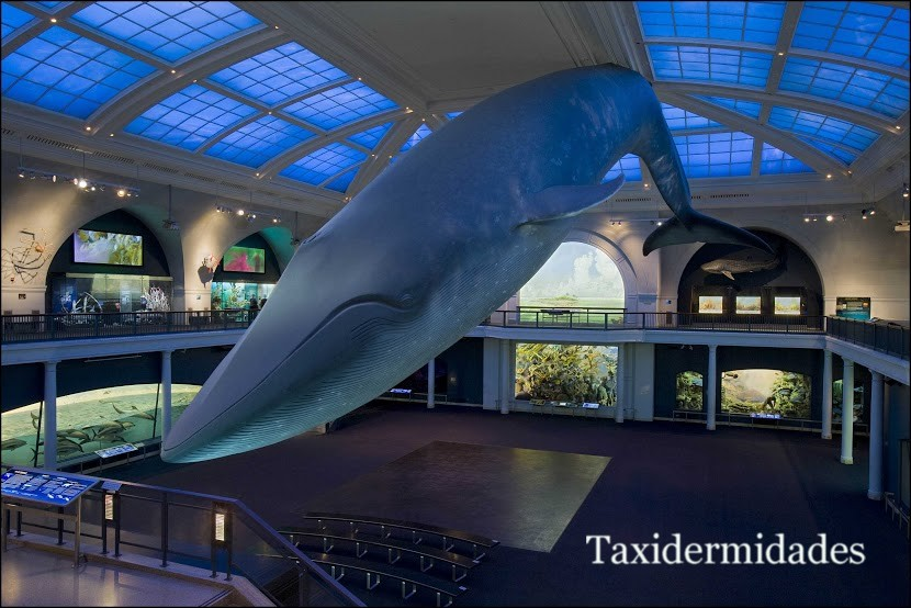 Museum Of Natural History In La
