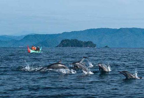 Kumpulan Lumba-lumba di Teluk Kiluan Lampung