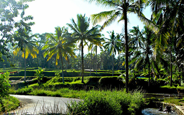 Pesona wisata Ubud Bali