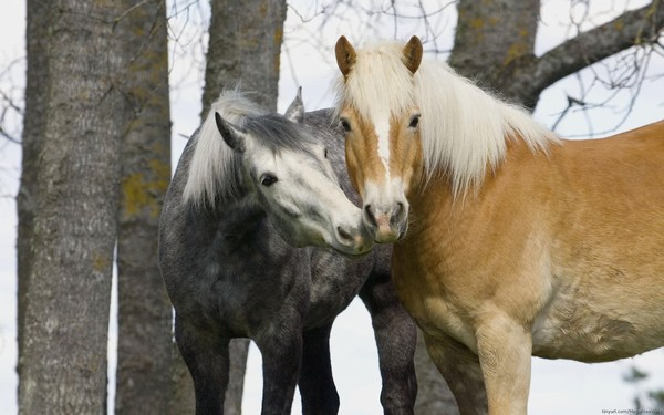 Beautiful Horses Pictures High Quality Widescreen