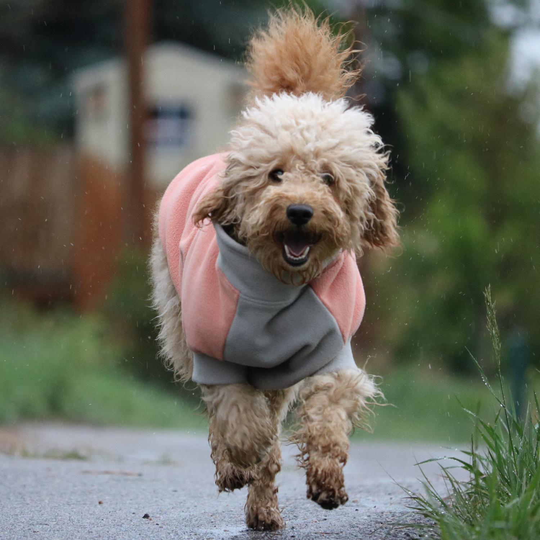 Fido Dog Coats - Goldenacresdogs.com