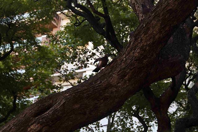 Paloma en rama de árbol