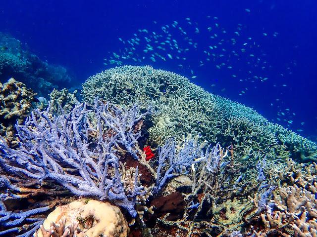 Coral Garden-Coron-Philippines