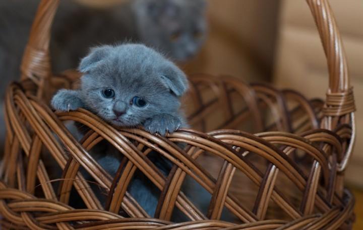 Nama Kucing Betina Lucu Cantik Dan Imut