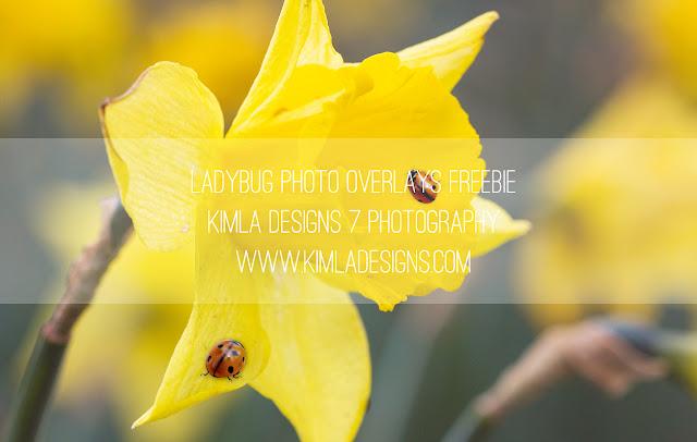 https://4.bp.blogspot.com/-EmzUcexbJ4M/VwU_qxESYjI/AAAAAAAAauY/XWXZ_NmbmXckHsblMUk0t-xAHK951WHNA/s640/Kimla-Designs_ladybug-overlays-freebie2.jpg