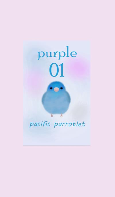 pacific parrotlet/Purple01