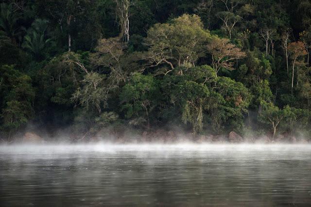First world survey finds 9,600 tree species risk extinction