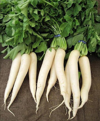 Radish Vegetable Vitamin Advances Medical Advantages