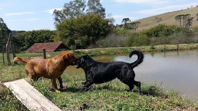 cachorros do camping