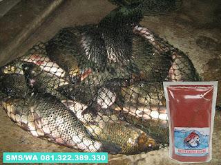 Umpan Ikan Mas Subang Khusus Malam Hari