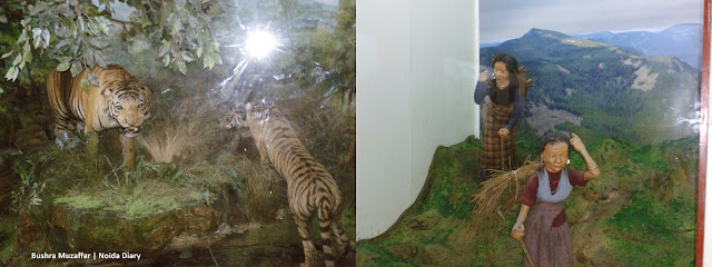 Noida Diary: Exhibits at The National Museum of Natural History