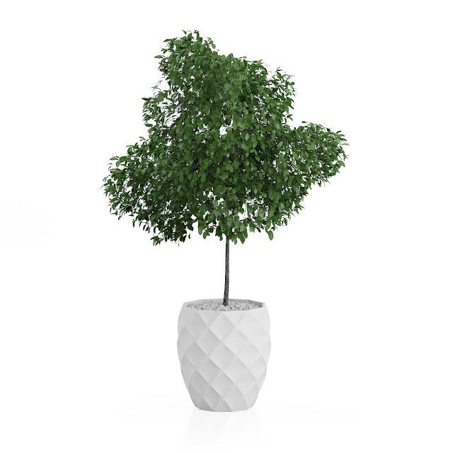 3D model free -  Plants_22
