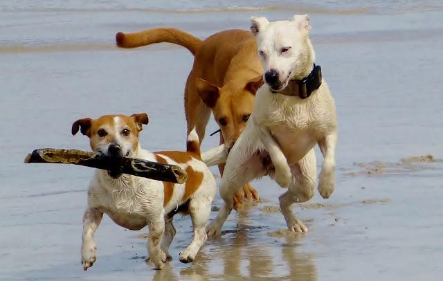 Ingin Kerjain Anjing Lagi Main di Pantai, Cowok Ini Malah Kena Karma, Bikin Netizen Ngajak Habis!