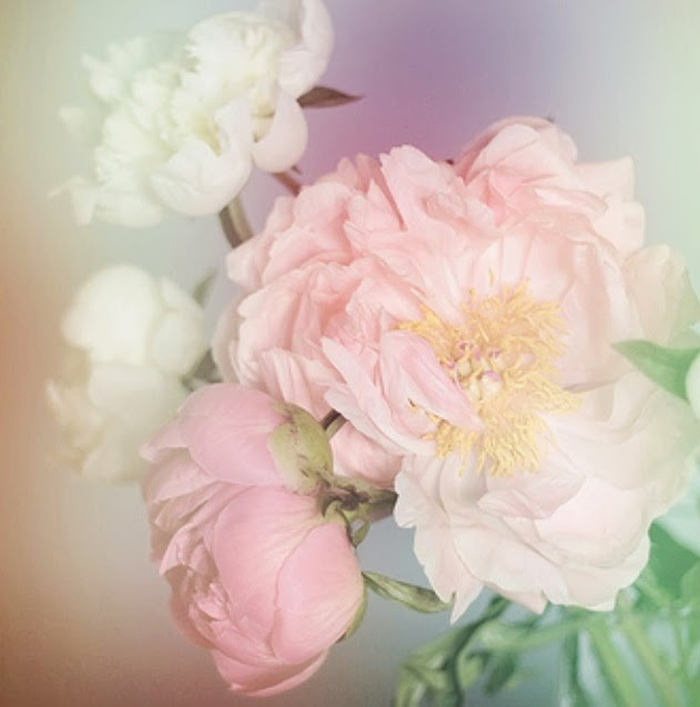 gorgeous pink and light pink peonies