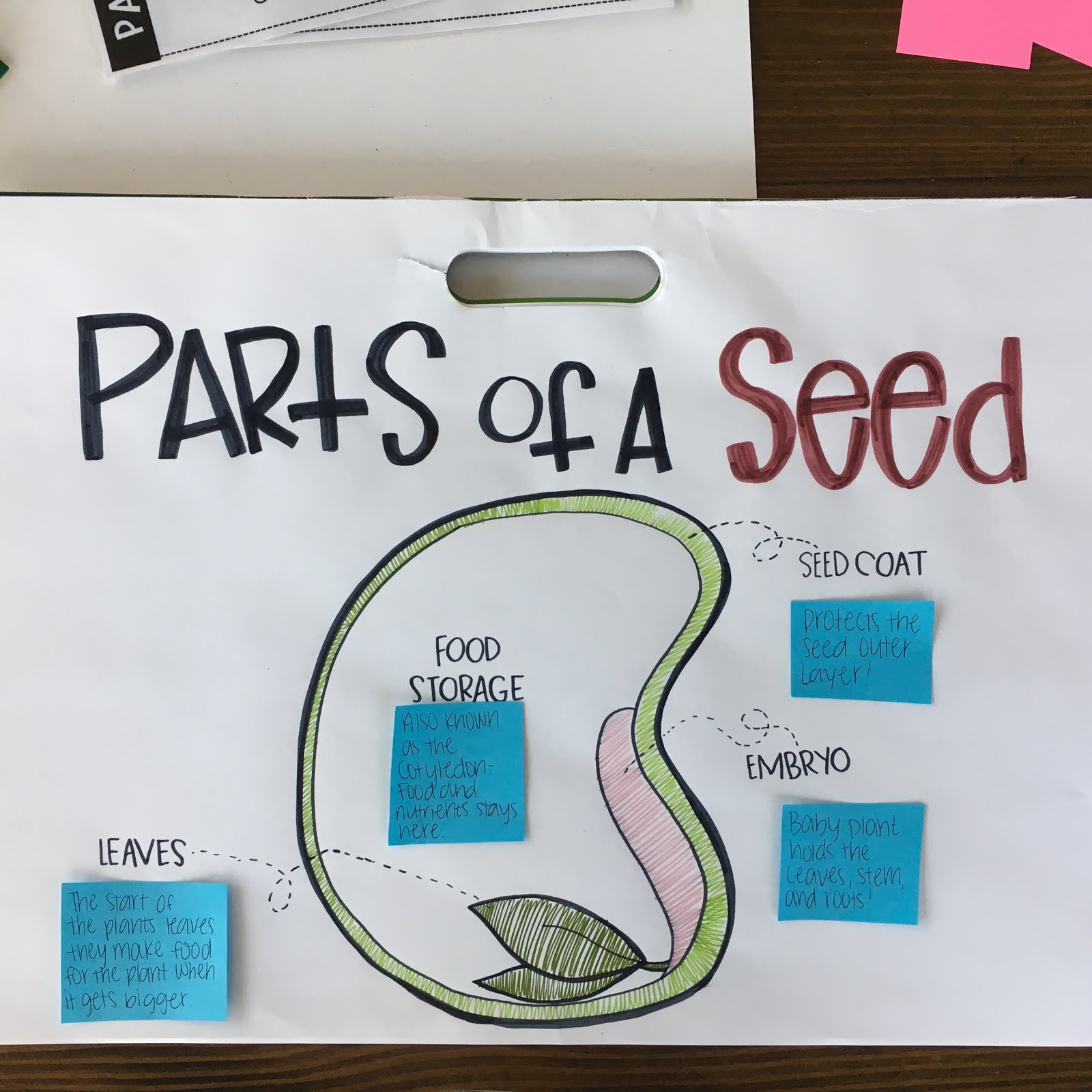 Parts Of A Seed Classroom Activities