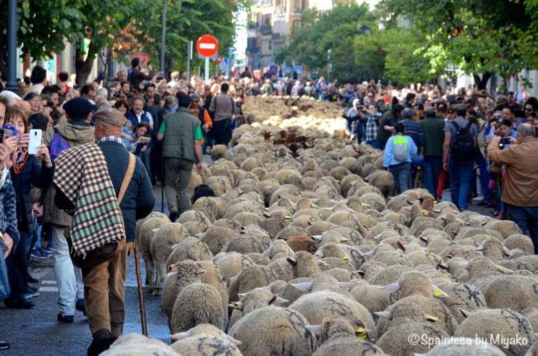 Fiesta de la Trashumancia Madrid  マドリード旧市街を練り歩く1500頭を超えるひつじの群れ