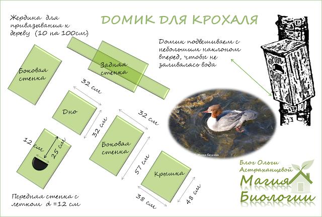 магия-биологии-как-сделать-домик-для-утки-крохаля-схема
