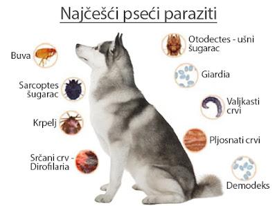 Najčešći pseći paraziti