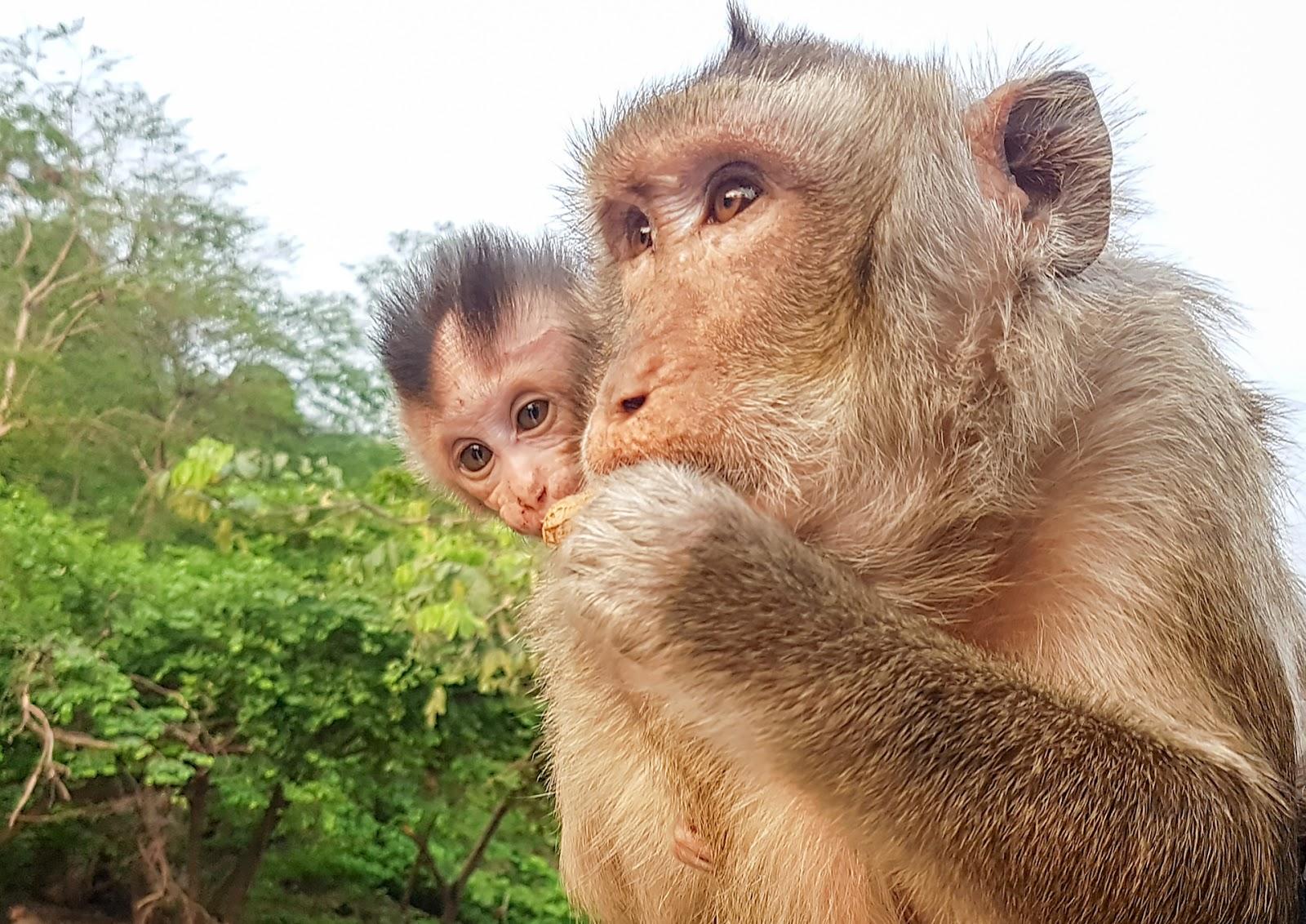 makaki,Tajlandia,małpy