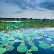 Tour of the Week: 1-Day Kakadu Tour