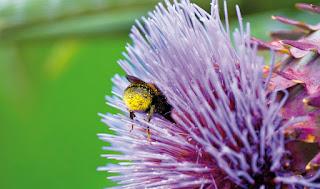 Plantes entomophiles